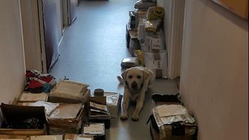 Pies znalazł ponad tysiąc nielegalnych przesyłek. M.in. towar za 68 tys. zł