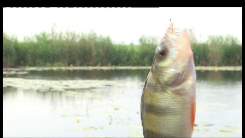 Taaaka ryba - Odcinek 142